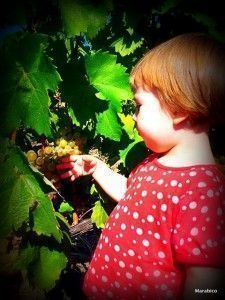fruta ecologica uva niños