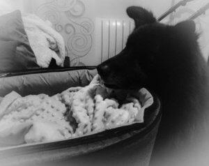 carrito de bebe para familias con mascotas